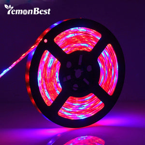 AMAZING DC 12V LED growth lights Strip - groomin101