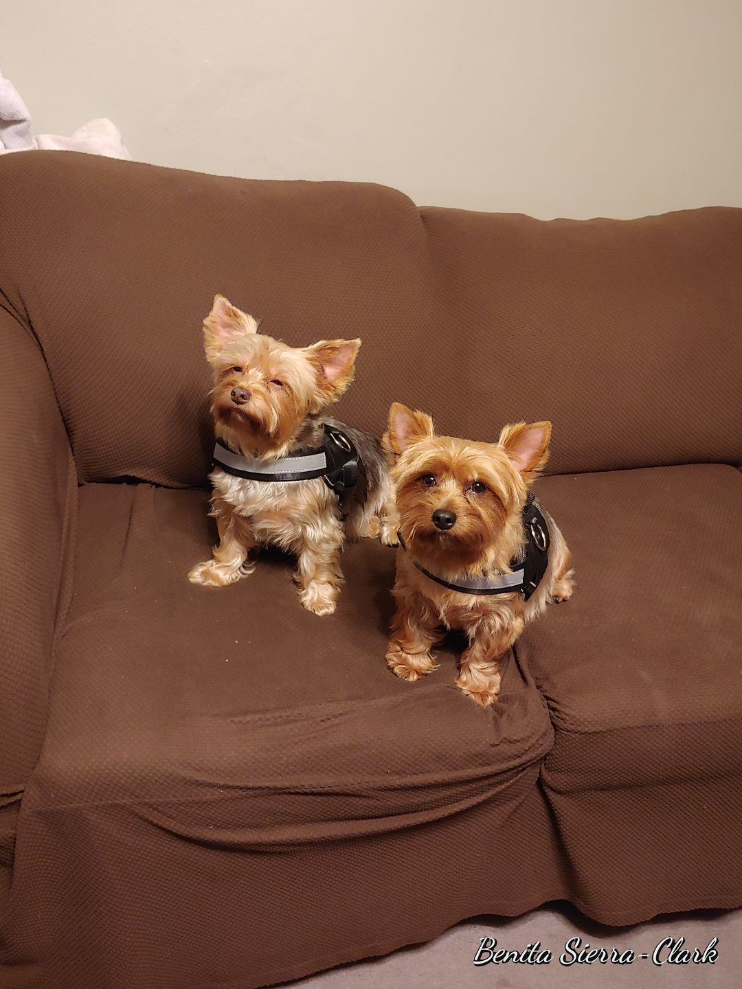 Dog Harnesses For The Big & Small