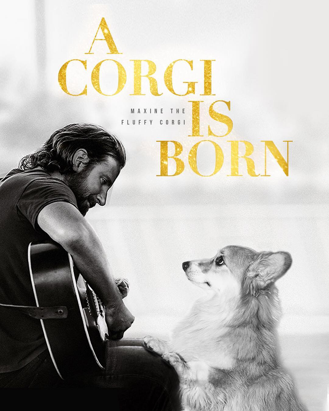 Dog Gets The Star Treatment By Being Photoshopped Into Movie Posters