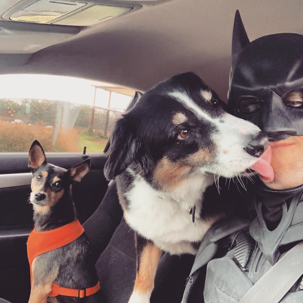 Batman Saves Animals From Euthanasia at Shelters