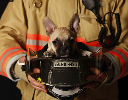 How To Keep Your Dogs Safe with Pet Fire Safety Preparations