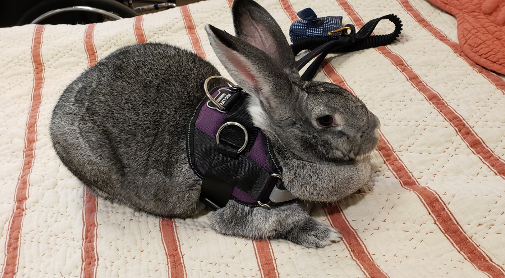 Featured Friend: Miss Lucy the Rabbit