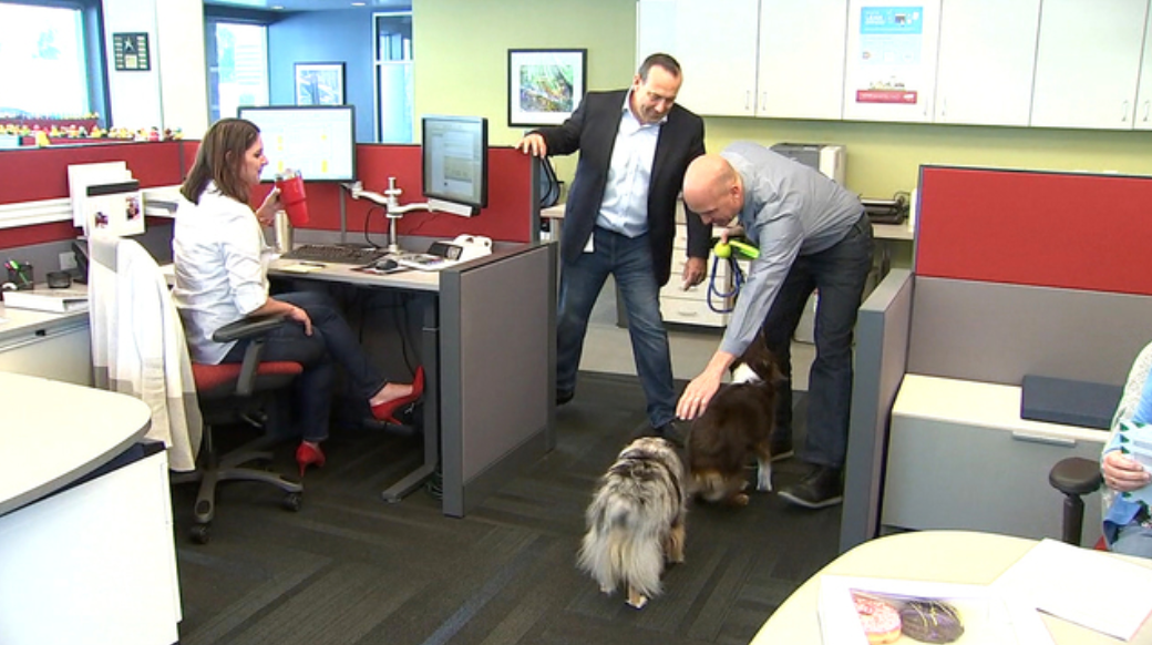 Dogs Take Over Office Space | Take Your Pet To Work Week