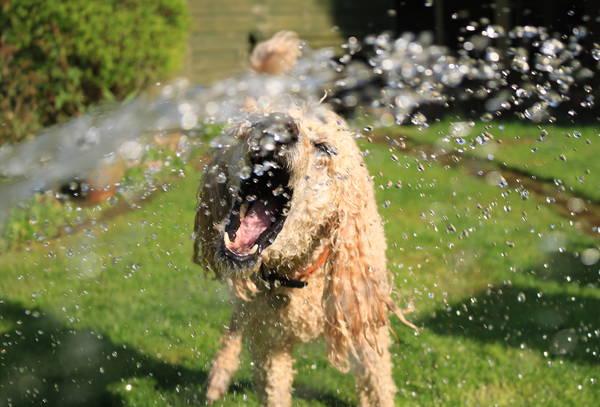 How to Keep Your Dog Hydrated During the Summer