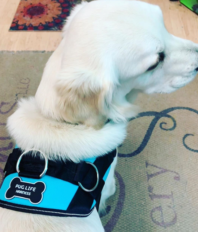 REVIEW: Best Dog Harness Now Available In Teal