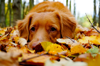 Reviews For the Best Fall Themed Dog Harnesses
