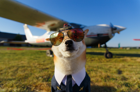 How to Prep For Flying With Your Dog