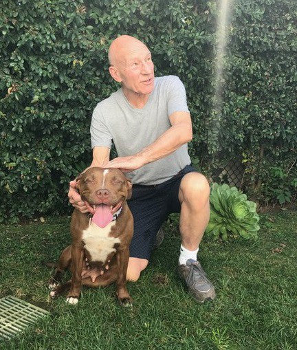 Star Trek Actor Patrick Stewart Forced to Rehome Foster Dog Because of UK Restrictions