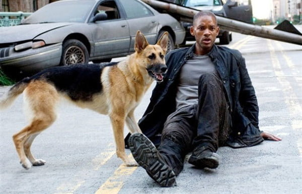 Abbey, Dog From 'I Am Legend' Is Alive & Well Safe From Zombies