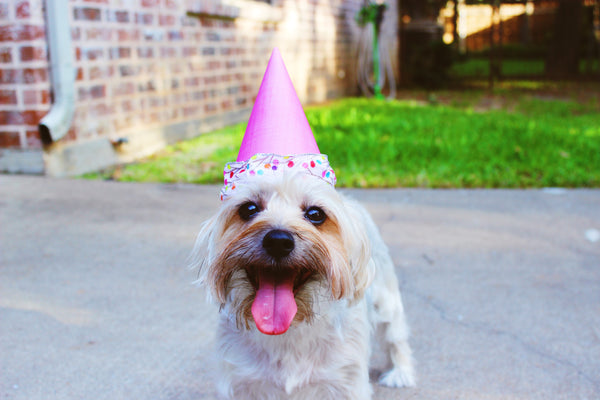 National Dog Day: Fun Ideas & Inspiration For Celebrating