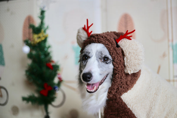 12 Christmas Gift Ideas For Dogs & Dog Lovers