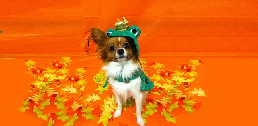 Find the Cutest Halloween Costumes for Your Pets!