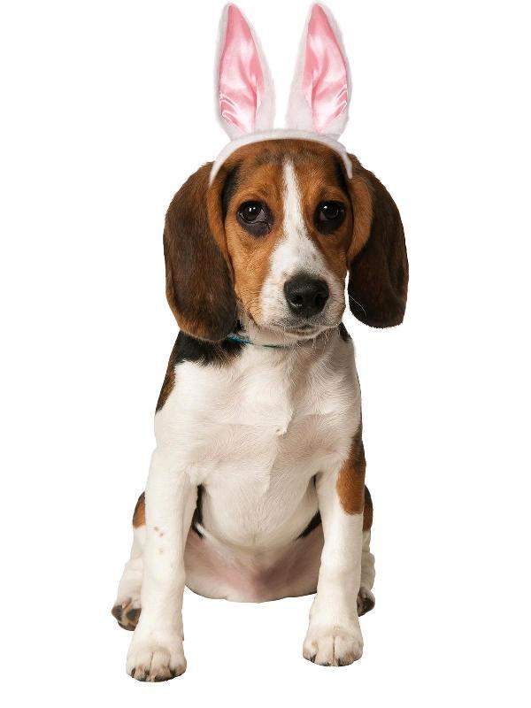 Bunny Ears Pet Accessory - Party Savers