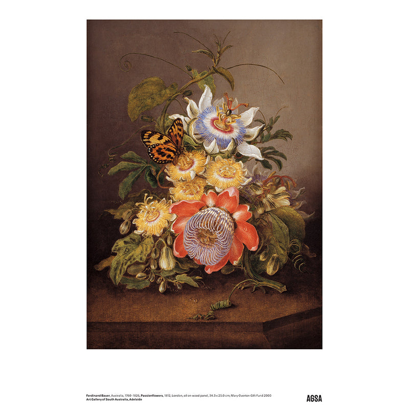 Passionflowers by Ferdinand Bauer - A3 Print