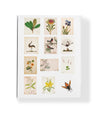 Drawn From Nature Boxed Card Set