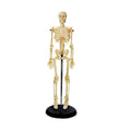 45cm Mini Plastic Skeleton Model