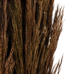 "36"" Plume Reed Bundle"