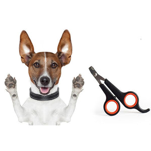 Buy High Quality Stainless Steel Scissors For Your Pet