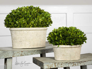 Preserved boxwood oval domes, set of two