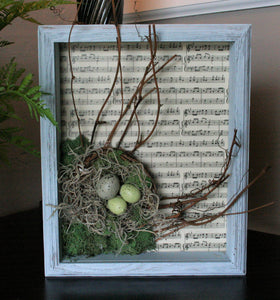 Shadow Box Bird's Nest
