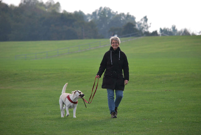 Walking Your Dog: 10 Tips for an Enjoyable Stroll