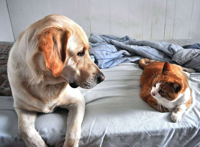 Should You Share Your Bed with Your Furry Friend?