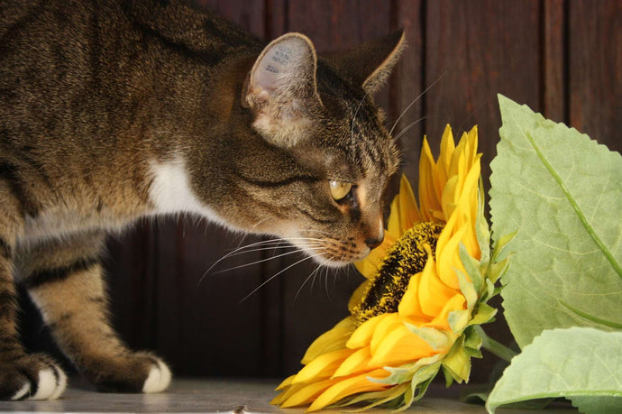 Homemade Cat Repellents to Keep Your Furniture and Garden Safe