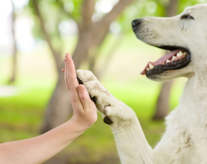Dog Paws – Weird Facts & Care Tips