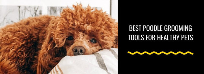 10 Best Poodle Grooming Tools for Healthy Pets