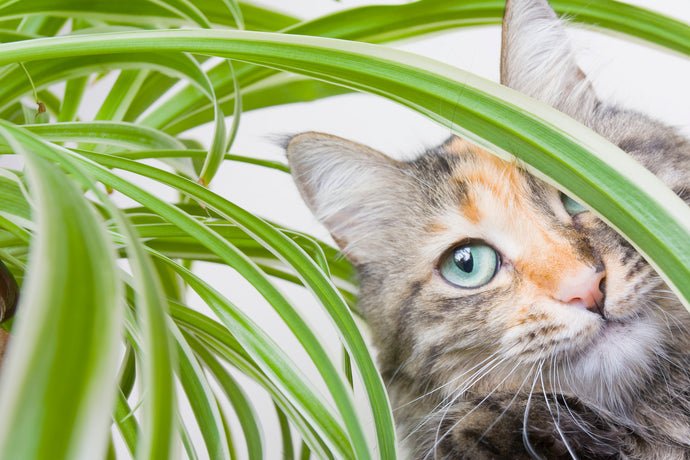 Common House Plants That Are Poisonous to Cats