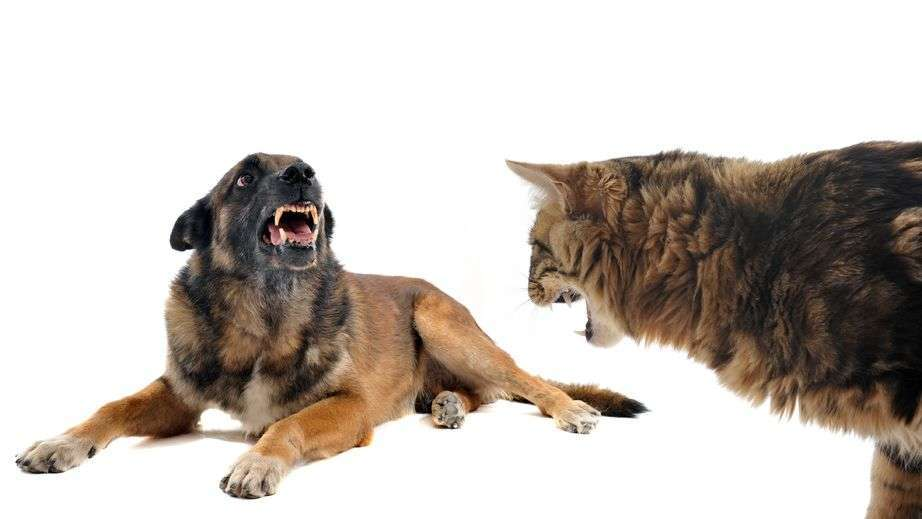 Tips for Owning Dogs AND Cats