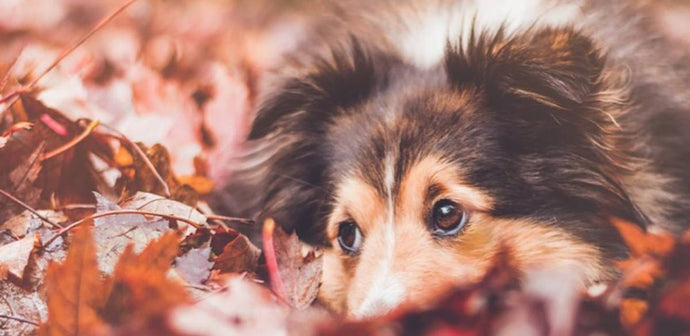 Best Tips on Safety, Health, And Play For Dogs In Autumn