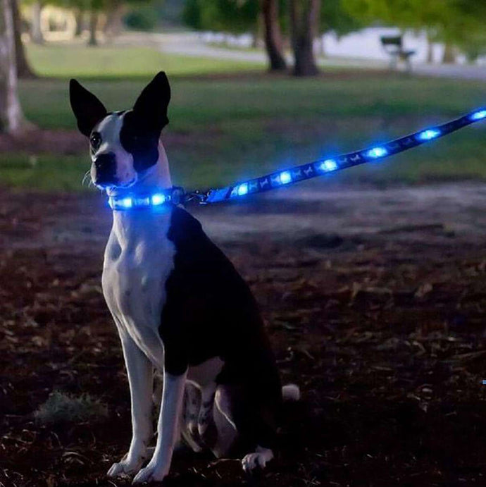 7 Great Inventions for Pet Owners
