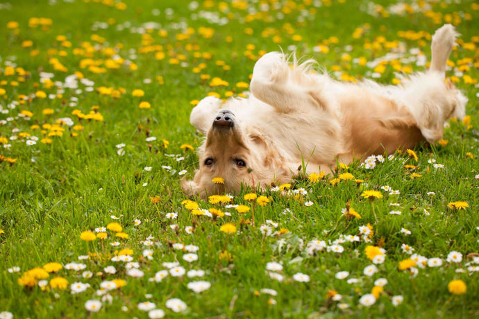 Poisonous Plants for Dogs & Their Skin