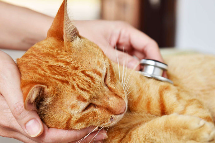 3 Cat First Aid Tips for Pet First Aid Awareness Month