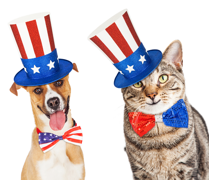 Fast Fourth of July Pet Safety Tips