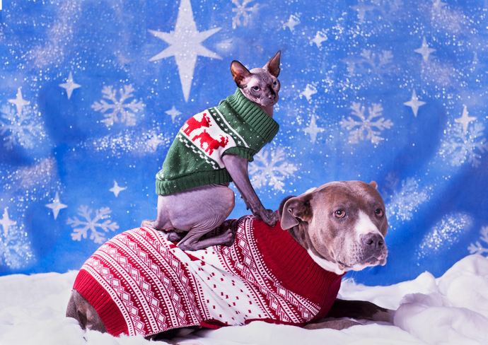 What Dogs And Cats Really Want This Giving Season (Hint: It's not an ugly sweater)