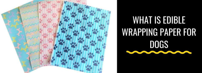 What Is Edible Wrapping Paper for Dogs and Why Is It Important?