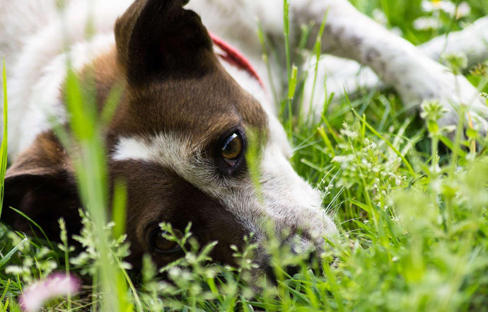 Your Must-Have Guide to Tick-Borne Illnesses in Dogs