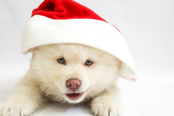 7 Tips to Keep Your Pets Safe this Holiday Season