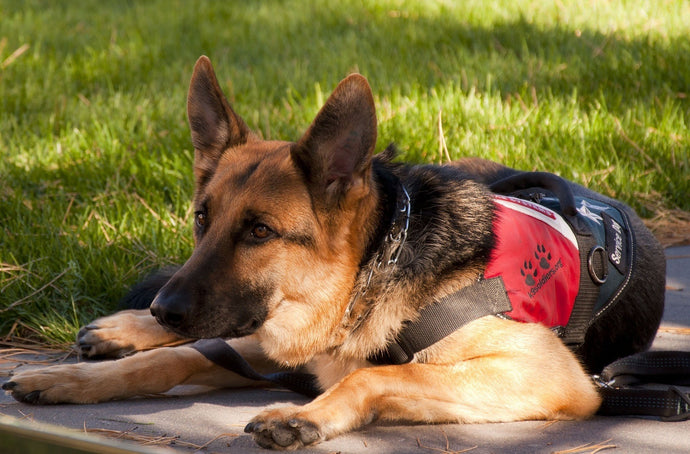 Famous Working Dogs To Recognize On Labor Day