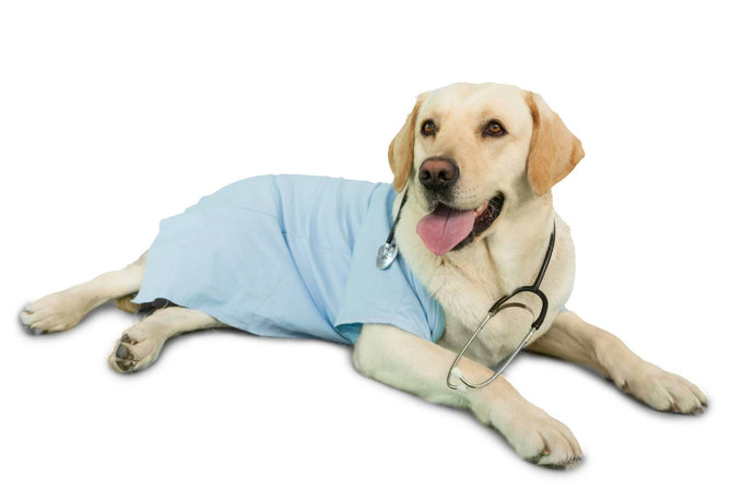 Can Dogs Prevent Human Illnesses?