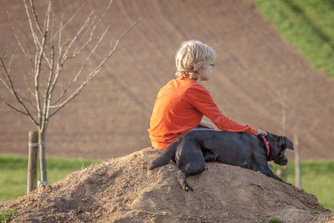 How to Build a Therapeutic Relationship with Your Dog