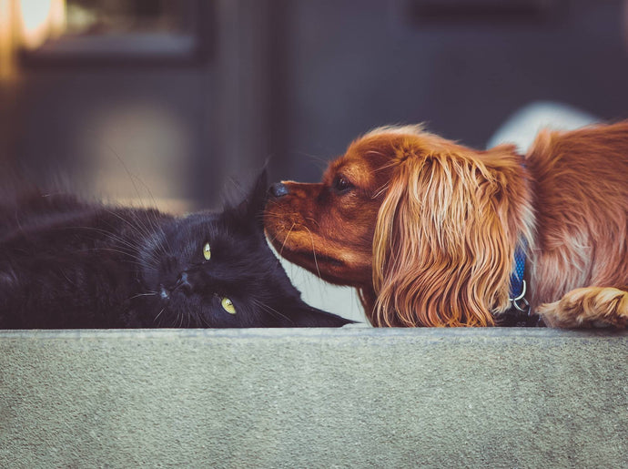 Our Most Common Dog And Cat Sayings, Explained!