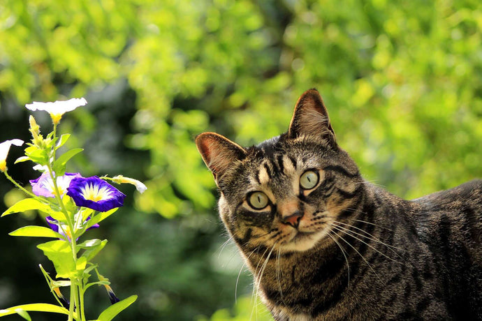 Poisonous Plants for Cats & Their Skin