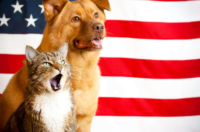 6 Tips to Keep Pet-riotic Pets Safe on July Fourth