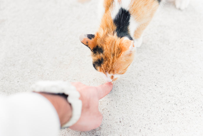 Cat Training - Basic Commands to Make Life With Your Cat Easier, Part-Two