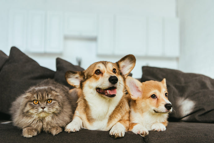 More Pawsome Pet-Friendly Movies