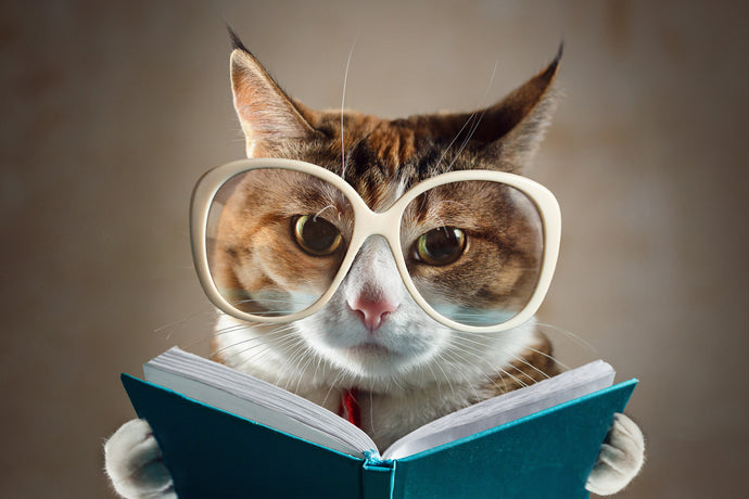 Purr-ific Books For Cat Lovers
