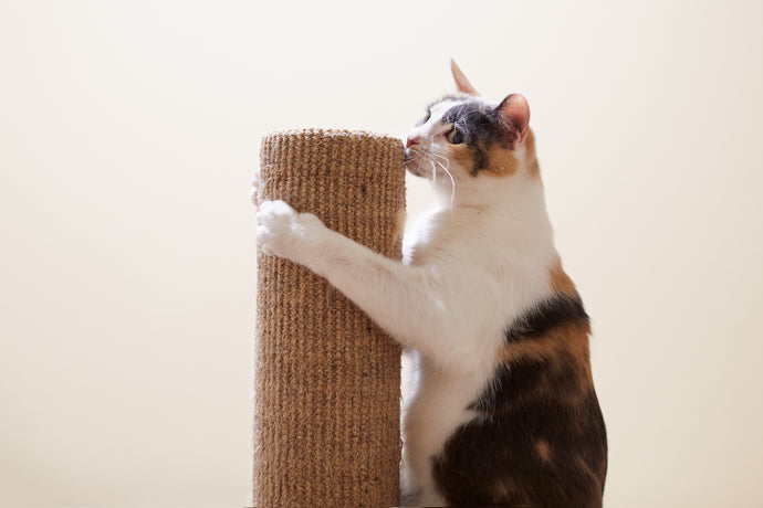 Scratch This, Not That! How to Train Kitty to Use Her Scratching Post
